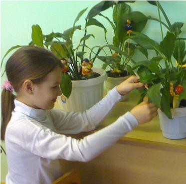 Женское счастье комнатное растение